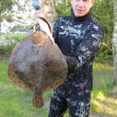 Turbot 2,5 kg - upolowany hawajką