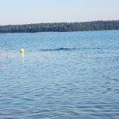 VII Międzynarodowe Mistrzostwa Polski w Łowiectwie Podwodnym - jesień 2021_126